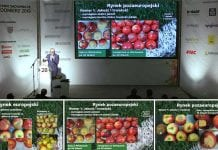 Polskie jabłka oczami sieci handlowych i eksporterów