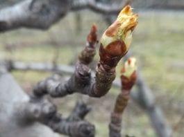 Polskie sad w pierwszym dniu wiosny