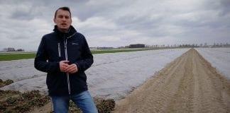 Komunikat jagodowy Timac Agro Polska – Początkowe nawożenie truskawki