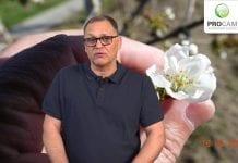 Komunikat Sadowniczy zalecenia PROCAM z dnia 16.04.2019