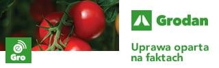 320×100 – Grodan – pomidory