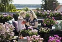 Uprawa pelargonii – obfite kwitnienie od wiosny aż do jesieni