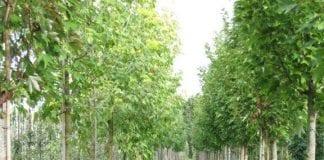 Murawa i pożyteczne rośliny – szkółkarstwo