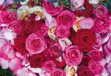 Tłumy na Królewskiej Wystawie Róż