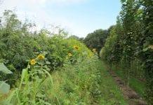 Murawa i pożyteczne rośliny