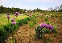 Ogród – bank genów w Rzuchowej obudził się do życia