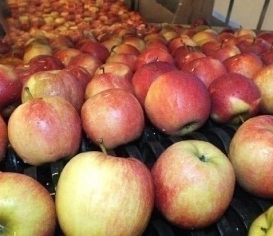 Tajwan – kolejny azjatycki rynek otwarty dla polskich jabłek
