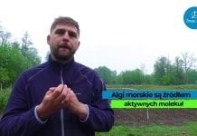 Komunikat Warzywniczy TIMAC – Sucha wiosna, a rozwój roślin
