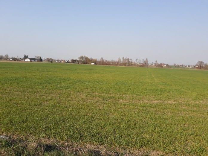 Susza wiosna 2019 - powiat toruński