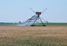 Nowy program nawodnień w rolnictwie