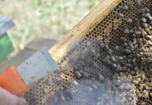 KE wesprze sektor pszczelarski