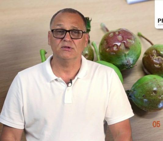 Komunikat Sadowniczy zalecenia PROCAM z 11.06.2019
