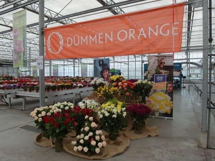 Na Dniach Otwartych można się było też zapoznać z wycinkiem oferty kwiatów ciętych koncernu Dümmen Orange - fot. I.Sprzączka