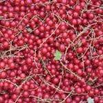 Ucywilizowanie łańcucha żywnościowego