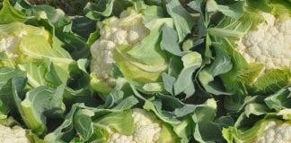 Braki podażowe warzyw na rynku hurtowym