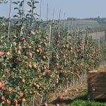 Wsparcie dla rolnictwa obszarów górskich