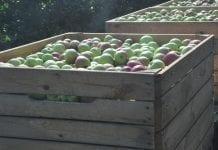 Reperkusje sadowniczych bolączek odczują konsumenci