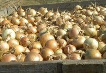 Ministerstwo Rolnictwa porządkuje rynek rolny