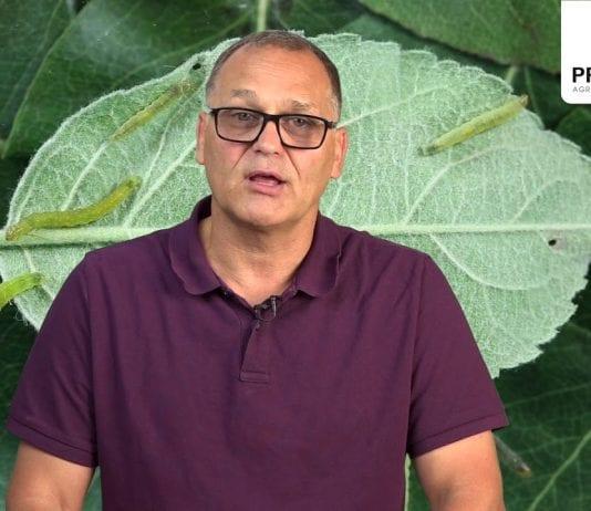 Komunikat Sadowniczy zalecenia PROCAM z 09.07.2019
