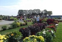 Kwitnące, pachnące i smaczne pokazy – weekend z Volmary