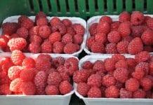 Owocowy rynek hurtowy