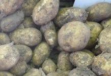 Ceny ziemniaków w lipcu
