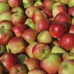 Eksport jabłek do Tajwanu
