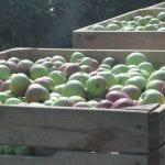 Hurtowy rynek owoców