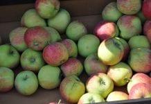 Owoce na rynku hurtowym