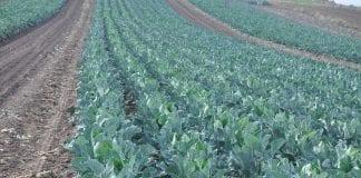 418 mln zł na kontach rolników – rozpoczęło się wypłacanie zaliczek dopłat