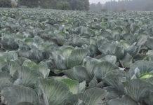 Nowe ustawy o zdrowiu roślin