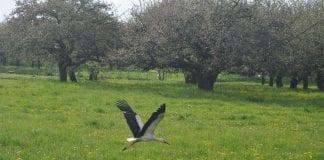 Jak państwo wspiera rolnictwo ekologiczne?