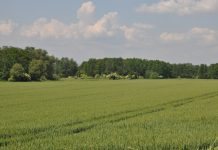 """""""Inwestycje w gospodarstwach położonych na obszarach Natura 2000"""" – wkrótce nabór wniosków"""