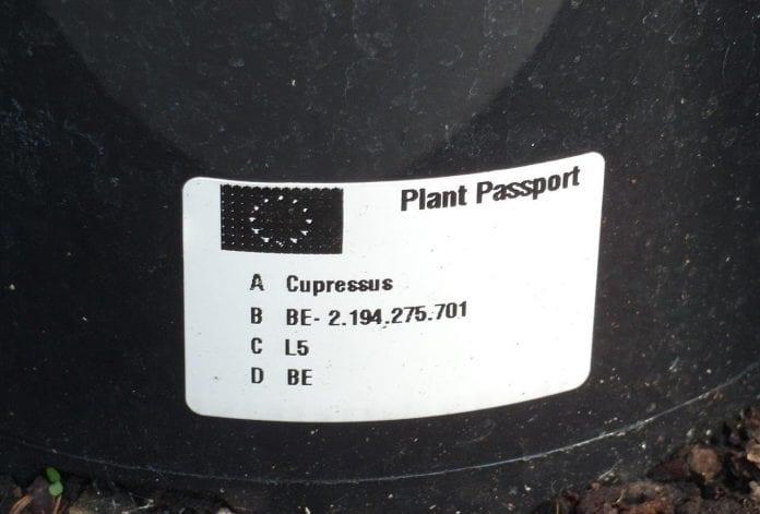Paszport-roslin