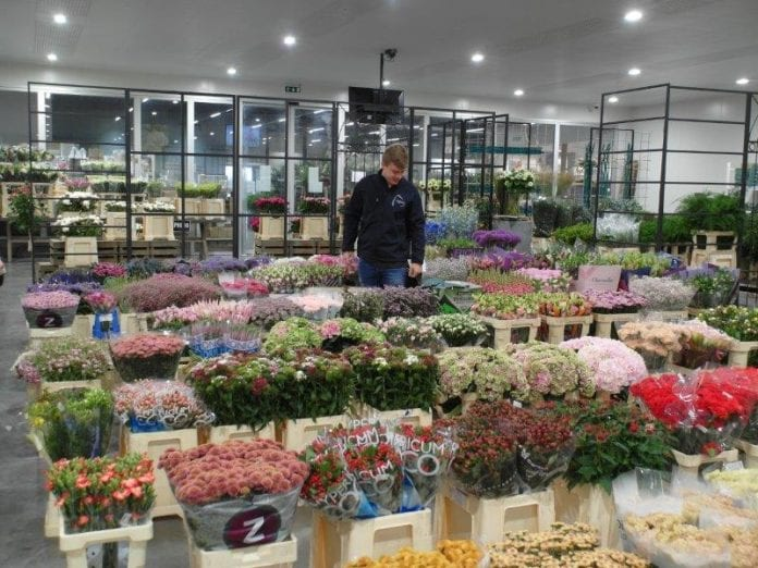 Hurtowania kwiatów ciętych