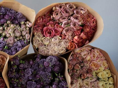 Suszone kwiaty róż