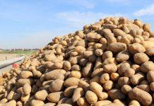 Program Ochrony Ziemniaka 2020 r.