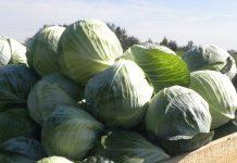 Jakie były plony warzyw i owoców w 2019 r.?