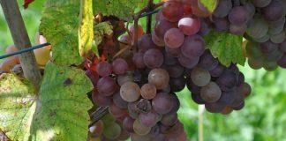 Deklaracje dotyczące rynku wina