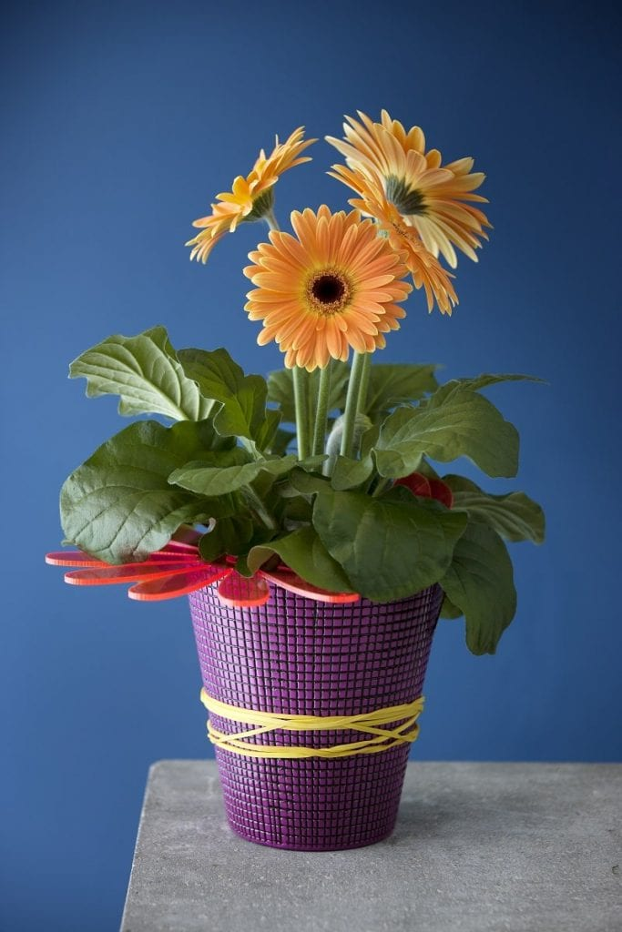 Gerbera fot. Floradania Marketing