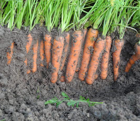 Nowe produkty na rzecz innowacyjnego rolnictwa
