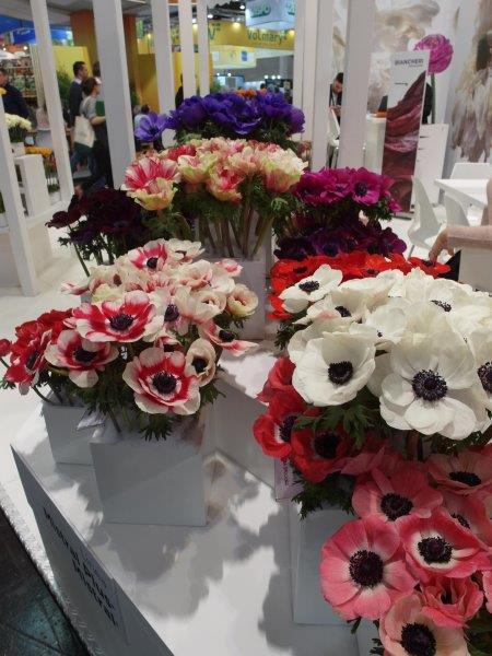 Kwiaty cięte w Essen