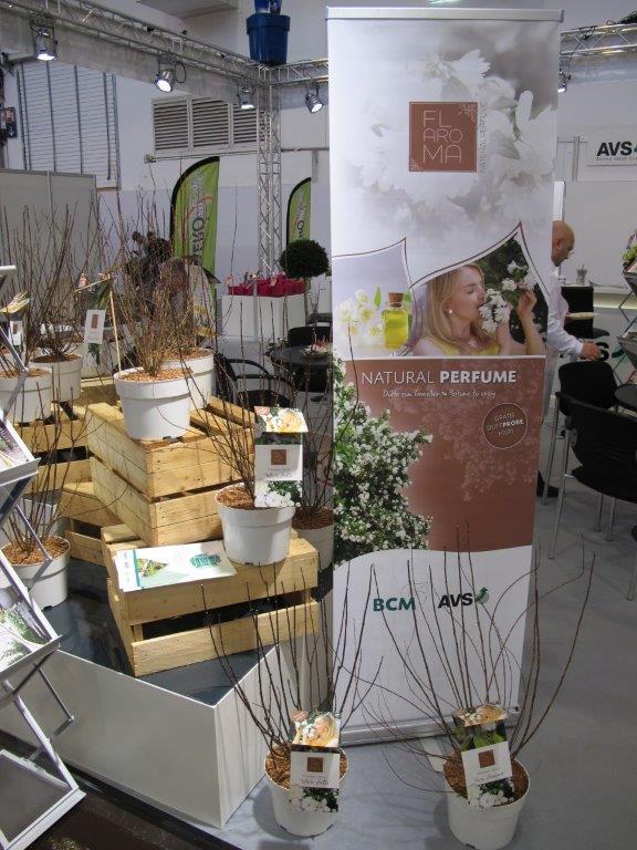 12 najintensywniej pachnących odmian jaśminowców zebrano pod marką Fl'Aroma