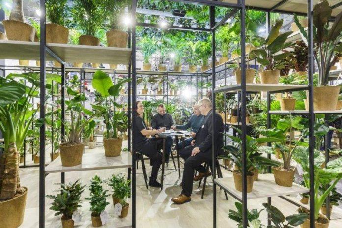 Rośliny o ozdobnych liściach do wnętrz