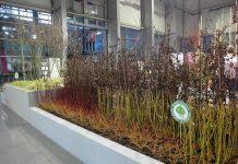 Gardenia 2020