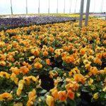 Handel roślinami ozdobnymi w czasach pandemii