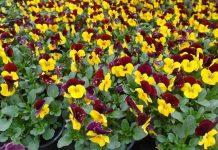 Szacunkowe straty branży kwiaciarskiej