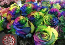 Jak koronawirus wpływa na międzynarodowy handel kwiatami?