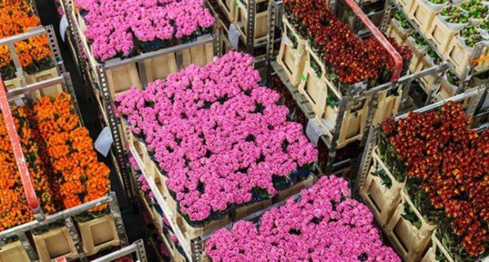 Kwiaty cięte na giełdzie