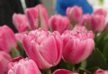 Dramatyczna sytuacja producentów kwiatów ciętych